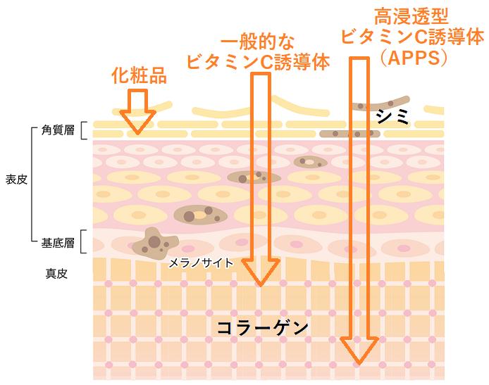 高浸透型ビタミンC誘導体(APPS)